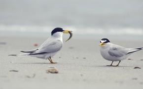 Picture birds, nature, fish