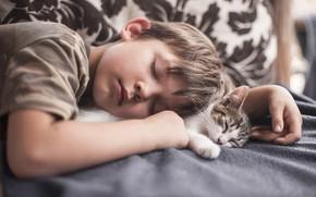 Picture stay, sleep, boy, kitty, friends, sleeping