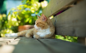 Picture red cat, lying on his side, on the bench