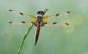 Picture macro, background, dragonfly, stem