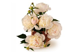 Picture flowers, basket, peonies