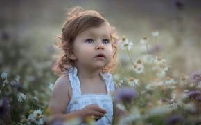 Picture flowers, nature, chamomile, girl, baby, child, sundress, Marta Obiegla