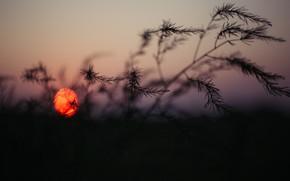 Picture Sunset, The sun, Nature, The evening, Sunrise, Plant, Morning, Dawn, Plants, Nature, Horizon, Sun, Sunset, …