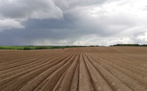 Picture field, earth, tractor, arable land, посевная