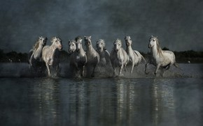 Picture the sky, water, light, squirt, reflection, overcast, shore, horses, group, the evening, horse, running, white, …
