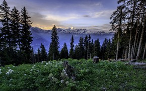 Picture forest, mountains, nature, morning