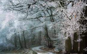 Picture winter, road, forest, snow, landscape, nature, beauty