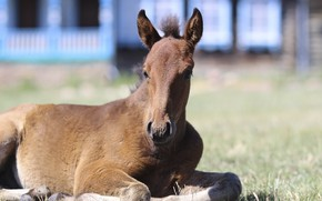 Picture background, baby, foal