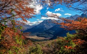 Picture autumn, landscape, branches, nature, mountain, beauty