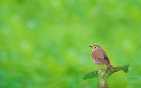 Picture nature, bird, branch, Komarovka