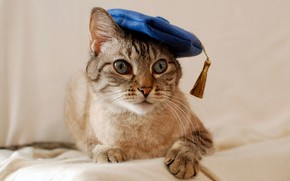 Picture cat, cat, look, blue, takes