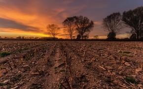 Wallpaper field, autumn, sunset