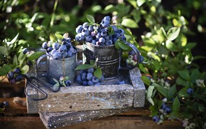 Picture berries, box, blueberries