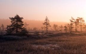 Picture autumn, fog, morning