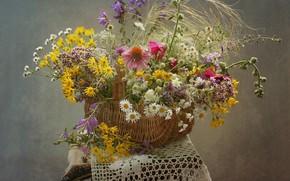 Wallpaper summer, basket, chamomile, field