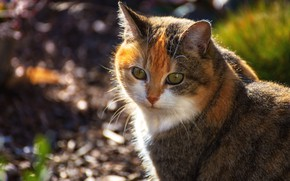 Picture cat, look, face, background, portrait, red, bokeh, spotted, motley