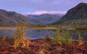 Picture autumn, the sky, mountains, lake, hills, shore, haze, pond, Christmas trees