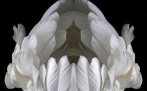 Picture swan, bird, animal