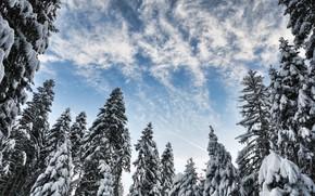 Picture winter, snow, trees, landscape, winter, tree, forest, landscape, nature, beautiful, winter, snow, fir tree