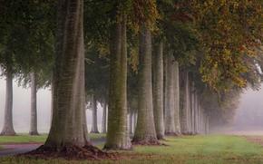 Wallpaper trees, fog, morning