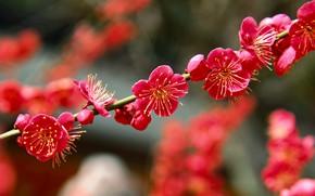 Picture branch, garden, Japan, drain, spring