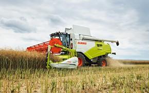 Picture field, harvester, CLAAS, TUCANO 580