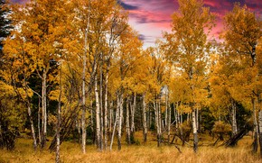 Picture autumn, forest, nature, Fall, Grand Tetons National Park
