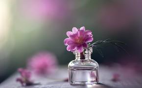 Picture flower, macro, bubble