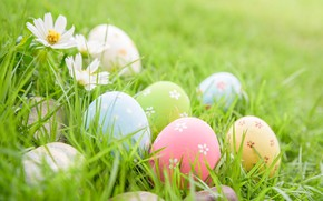 Picture grass, flowers, eggs, Easter, happy, flowers, eggs, easter, decoration