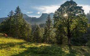 Picture greens, forest, summer, the sun, clouds, rays, light, trees, mountains, branches, fog, tree, hills, foliage, …