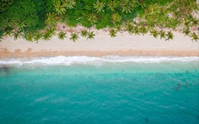 Picture sea, beach, summer, nature, tropics, palm trees, shore, the view from the top