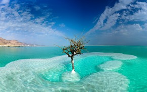 Picture sea, the sky, clouds, tree, Israel, Dead Sea, Neve Zohar