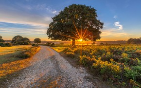 Picture road, field, the sun, light, trees, sunset, tree, dawn, ferns, Sunny