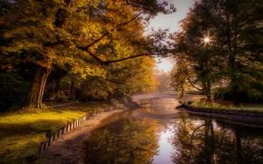Picture trees, landscape, nature, pond, Park, track, Netherlands, the bridge, alley, Holland