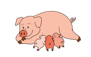Picture pig, the three little pigs, pigs