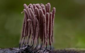 Picture macro, nature, background, mushrooms, the beam, Beat Buetikofer