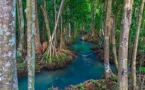 Picture forest, lake, river, forest, tropical, landscape, beautiful, lake, tree, tropical, mangrove, emerald, mangrove