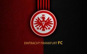 Picture wallpaper, sport, logo, football, Bundesliga, Eintracht Frankfurt