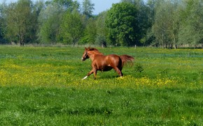 Picture grass, horse, meadow