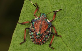 Picture Sheet, Beetle, Bug