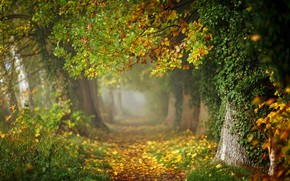 Picture autumn, forest, leaves, trees, branches, fog, Park, trunks, foliage, track, haze, alley, falling leaves, path, ...