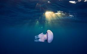Picture sea, water, Medusa, underwater world