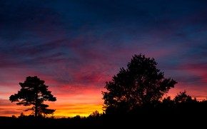 Picture forest, the sky, clouds, trees, sunset, nature