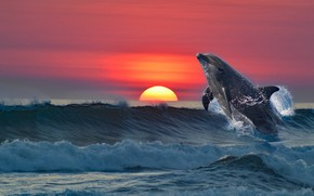 Picture sea, sunset, Dolphin, rendering