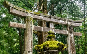 Picture Nature, Japan, Forest, Torii