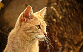Picture cat, red, blurred background