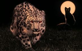 Picture night, the moon, predators, hunters