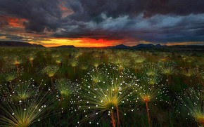 Picture clouds, clouds, plant, glow, Brazil, Chapada DOS Veadeiros, paepalanthus