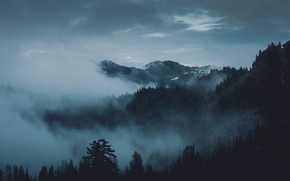 Picture forest, the sky, trees, mountains, nature, fog