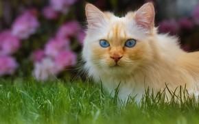 Picture cat, grass, cat, look, face, flowers, portrait, garden